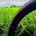20160605 關山自行車道印象