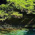 櫻花鉤吻鮭的故鄉