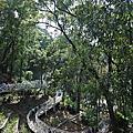 國內旅遊●嘉義縣竹崎鄉竹崎親水公園:天空走廊