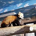 國外旅遊●日本栃木県那須どうぶつ王国:保全の森