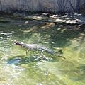 國外旅遊●日本栃木県那須どうぶつ王国:ペンギンビレッジ