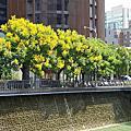國內旅遊●台中市麻園頭溪河川綠能生態水岸