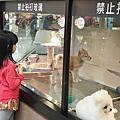 亞亞的環球狗狗夢