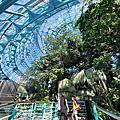 亞亞的熱帶雨林溫室