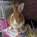 兔子TTouch