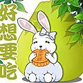 金元寶兔兔