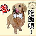 帥氣的黃金單身狗!!