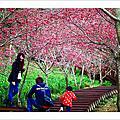 20160222_沐心泉之春天就是要拍春櫻