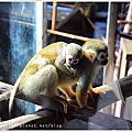 2012成都_雅安碧峰峽野生生態動物園