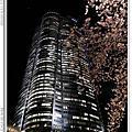 2014.04.04 日本東京.春賞櫻Day2.夜間賞櫻-六本木
