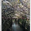2014.04.05 日本東京.春賞櫻Day3.美麗的櫻花隧道中目黑