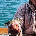 四萬十屋鰻魚飯、遊船賞傳統漁法