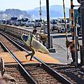 Q2020 日本鐵道旅人杰語:湘南F#03 高手在那平交道灌籃