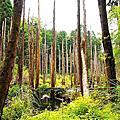 20110805 忘憂森林
