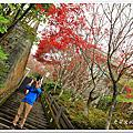 翠峰湖山毛櫸步道
