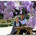 20150404武陵紫藤