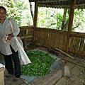 普洱茶的製作過程