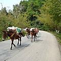 欣逢古老的運輸功臣:馬幫