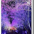 冬 . 櫻