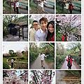 20140301賞櫻 湖山路二段38號