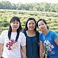 20090507桐花季PART2油桐花坊+四月雪小徑