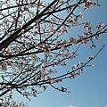 [旅遊]海綿寶寶:暢遊比奇堡特展104/2/10~5/10中正紀念堂