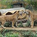 2016.06.12 新竹動物園