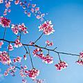 2014-02-23杉林溪森林遊樂區.溪頭松林町妖怪村-5DⅡ