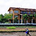 【宜蘭旅遊景點推薦】2014 三星嘉年華 波斯菊花海 【宜蘭民宿】Sunday Home