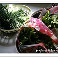 090201-蔬菜豐收