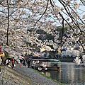 京都奈良賞櫻