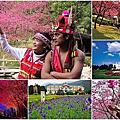 2018九族櫻花祭