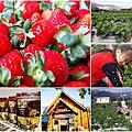 日月潭草莓季2018