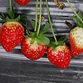 和小美's folks 去山上採草莓草莓草莓!