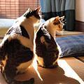 吉祥物CATS《豆腐與丸子》
