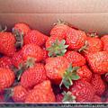 980221~內湖休閒農場採草莓