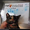 TNR-林惠敏