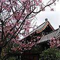 大台北賞櫻景點