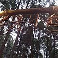 2010.12.11 新竹綠光森林
