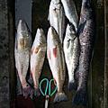 寶島魚很大 海釣場