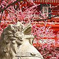 《日本》京都清水寺