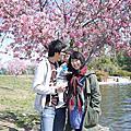 2013 Lake Balboa 又是櫻花季