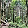 雲嶺之丘 | 杉林步道 | 五元兩角