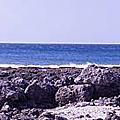 鼻頭漁港海鮮