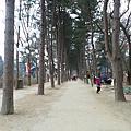 2015冬首爾四日遊