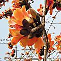 2014.03.17(台南高鐵木棉花)