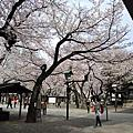 2016春日本東京賞櫻Day2