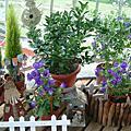 西薇亞的小花園