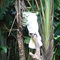 20080621 北埔綠世界