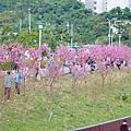 東湖樂活公園賞櫻